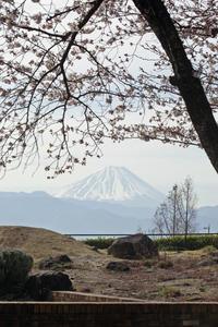 こりゃ絵葉書だ!逆光気味で富士山が弱いけど。中央高速道路「双葉展望台」 - meの写真はザンス