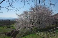 天理市柳本町 - ぶらり記録 2:奈良・大阪・・・