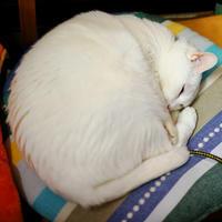 猫まるい - 蓮華寺池の隣5