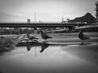 横断するハト様ご一行 - Film&Gasoline