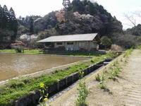きょうはブログ上でも、花見です。 - 千葉県いすみ環境と文化のさとセンター