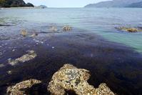 海の中の森 - Beachcomber's Logbook