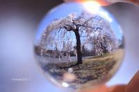 カメラ女子の遠足~桜の撮影会~ in西方ふれあいパーク - 日々の贈り物(私の宇都宮生活)
