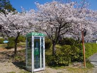 桜の木の下に - ほっとひと息