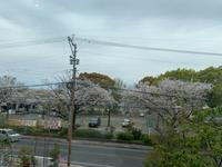 春は新しいスタート - 【熊本エステ/東京】あなたの綺麗をプロデュース♡サロン・スクール経営♡渡邊明美