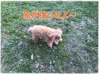 わたくしごと&キャラメル&桜 - キャラメルエッセンス~caramel essence~