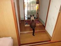 猫ちゃん達 - 香りの部屋