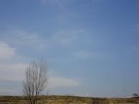 4.5の空 - Magnolia Lane