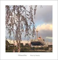 この枝垂れ桜 - Minnenfoto