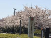 広尾日赤の裏庭は桃源郷−2019 - 青山ぱせり日記