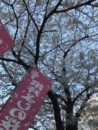 花が見たくば常世へござれ。 - 作曲家・平野一郎のブログ