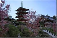 桜の季節の西日光耕三寺 - ハチミツの海を渡る風の音