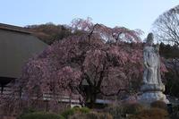 宝積寺宵桜令和ライトアップ - 風の彩り-2