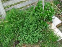 ひどい状態なのです・・・ - natural garden~ shueの庭いじりと日々の覚書き