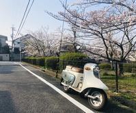 ご近所の桜を愛でる - 笑わせるなよ泣けるじゃないか2