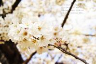 春酔い散策。 - 暮らしをつむぐ。* 暮らしごと・日々のこと*