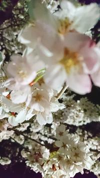 4月の予定 - 平野ヨガイージー mi
