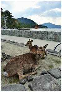 宮島の鹿と参道での食べ歩き -  one's  heart