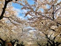 4月7日(日)の営業時間は12:00〜17:00 です。味噌汁の日です(笑) - miso汁香房(ロジの木)