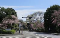 春の風景@神宮外苑 - AREKORE