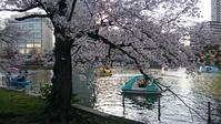 台東区上野恩賜公園のさくら - 一場の写真 / 足立区リフォーム館・頑張る会社ブログ