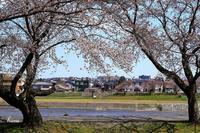 犀川緑地公園 - 晴れ時々そよ風