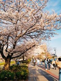 花散らしの強風みなとみらい - マーブルDiary