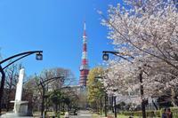 東京桜散歩 その1《東京タワーからスカイツリーへ》 - Granpa ToshiのEOS的写真生活