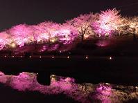 桜のライトアップ2 - 松露園 blog