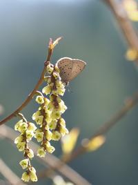 スギタニの多い林道を歩く - 蝶超天国
