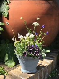 4月Garden&Crafts寄せ植え教室の準備ができました。 - 小さな庭 2