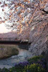 桜だより(10) 桃木川畔 (2019/4/5撮影) - toshiさんのお気楽ブログ