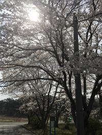 サーフ&カリフォルニアスタイルの平屋のお家〜見学会開催 - カフェスタイルの家づくり~Asako's WORK & LIFE
