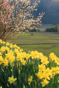春色の向こうをゆく - かにさんの横歩き散歩日記