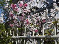 モモの花 - エンジェルの画日記・音楽の散歩道