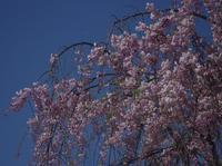 毎日お花見 - 優しい風のなかで