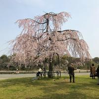 桜が咲く頃 - のんびりいこうやぁ 2