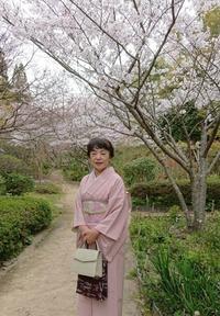 春うらら桜にはお着物♪ - 山口下関市の着付け教室*出張着付け    はまゆうスタイル