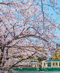 桜と江ノ電 - エーデルワイスPhoto