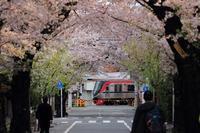 上北沢駅付近の桜トンネル - 飛行機&鉄道写真館