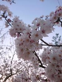 お花見出来たよー♪ - 自分カルテRで思考の整理を~整理収納レッスン in 三重