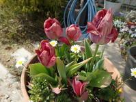 色あせた花と、これからの花♪ - henda  マイライフⅡ
