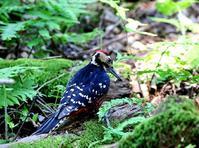 初めての奄美大島(その2) - 一期一会の野鳥たち