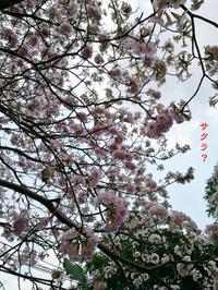 満開の桜擬 - Tangled with 2・・・・・
