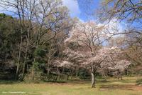 里山に春がやってきた。 - 虫籠物語