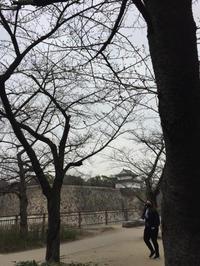 神社巡り『御朱印』豊国神社 - (鳥撮)ハタ坊:PENTAX k-3、k-5で撮った写真を載せていきますので、ヨロシクですm(_ _)m