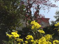 庭の花 - ハタ坊(釣り・鳥撮・散歩)