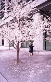 Farewell to HEISEI SAKURA - 心のカメラ   more tomorrow than today ...