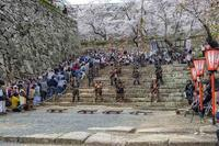 津山鶴山公園 桜満開 - 寅年生まれ