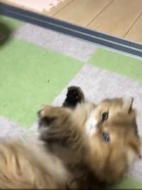 お試し😻 - 青梅ニャンだふる☆Life